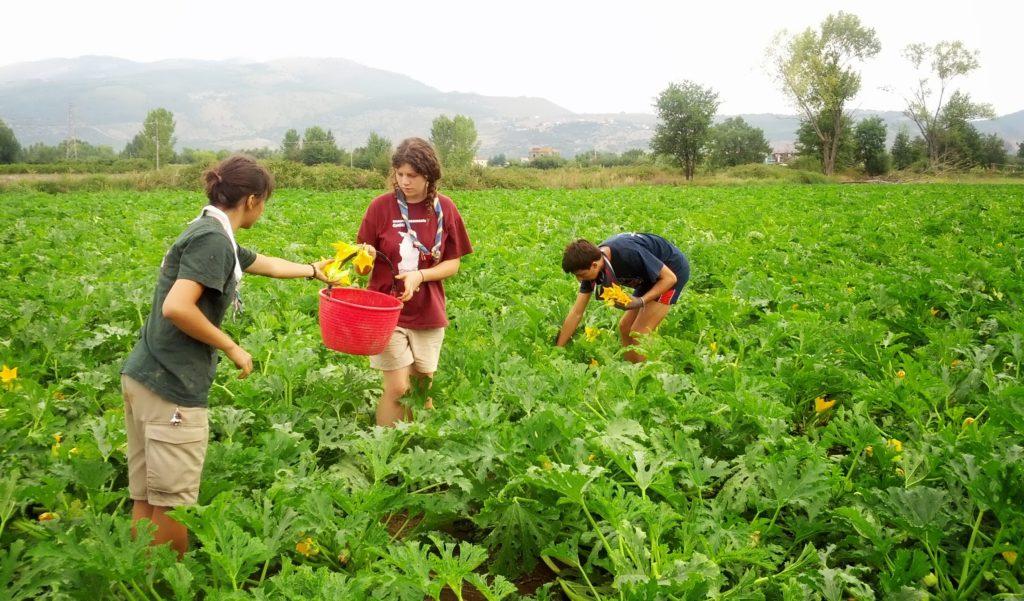 scout CNGEI e LIBERA - lavoro nei campi